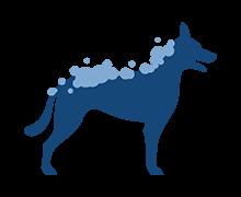 Wassen - Vachtverzorging Hond