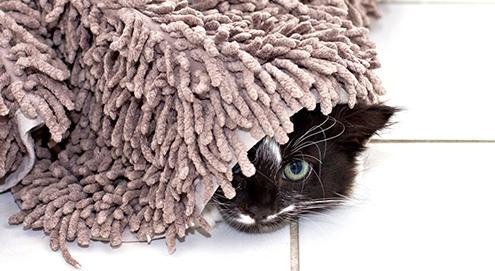 A l'aide ! Mon chat urine dans la maison. Que faire ?