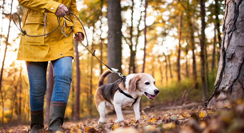 Acorns are toxic to your dog. Please beware during forest walks!
