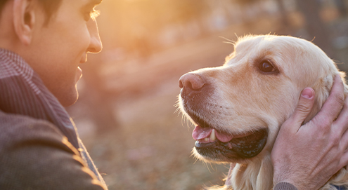 Everything about adopting a shelter pet