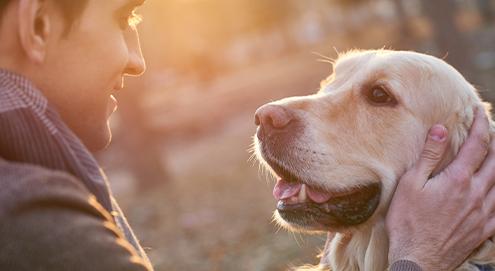 Alles über die Adoption eines Tieres aus einem Tierheim