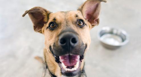 Alles übers Ohr und Ohrenentzündungen beim Hund