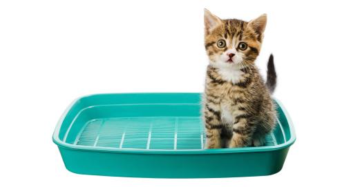 Apprendre à son chaton à utiliser sa litière