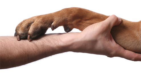 Arthrose erkennen und behandeln
