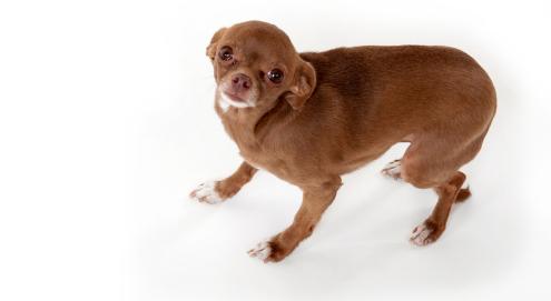 Aanpak van angst en stress door harde geluiden bij je huisdier