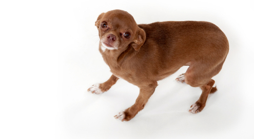 Behandlung von Angst vor lauten Geräuschen und Lärm (z.B. Feuerwerk) bei Tieren