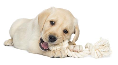 Bijtgedrag van een pup