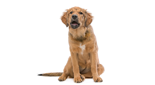 Waarom blaft je hond?