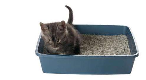 Blasensteine und Blasengrieß bei Katzen