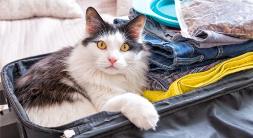 Checklist: Huisdier niet mee op vakantie, waar let je op?