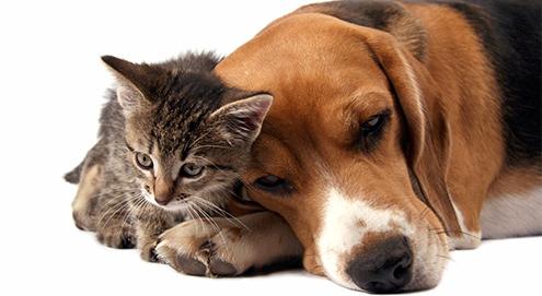 Chronische Niereninsuffizienz bei Hund und Katze
