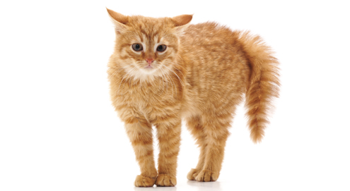 Comment socialiser son chaton ?