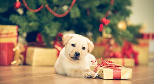 Conseils pour passer un Noël parfait