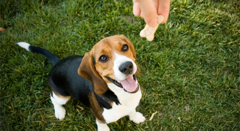 De allerlekkerste snacks van Beeztees voor jouw hond!