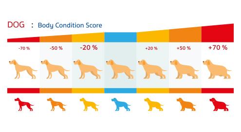 De Body Condition Score van de hond en kat