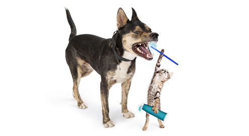 Dental diet for dogs and cats