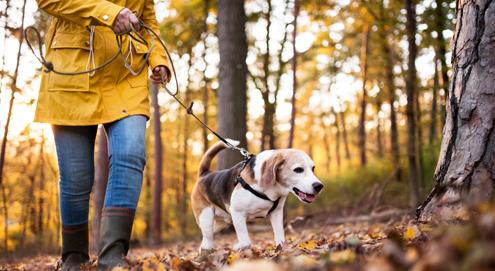 Eikels zijn giftig voor de hond. Let op tijdens de herfstwandeling!