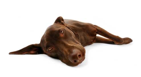 Epilepsy in dogs and cats
