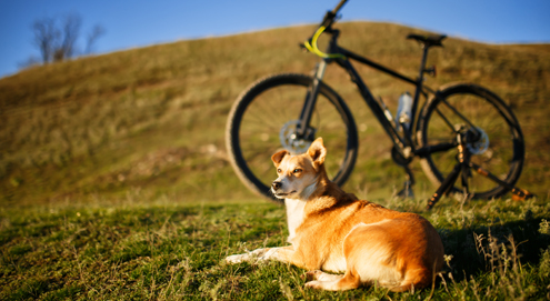 Fahrradfahren mit dem Hund