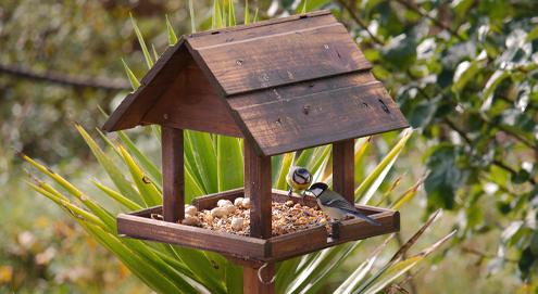 Gartenvögel füttern: Wann füttern Sie was?