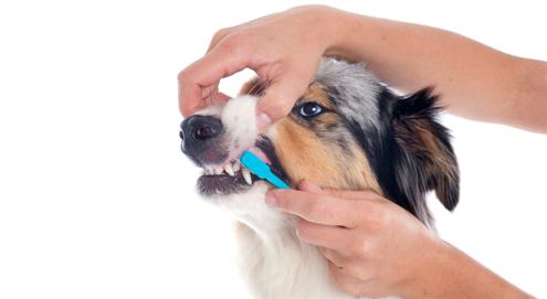 Gebisspflege bei Haustieren