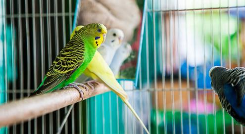 Gourmetten en het gevaar voor vogels