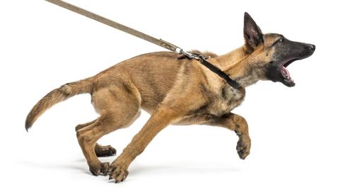 Help! My dog pulls on the leash!