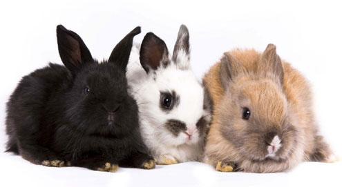 Het houden van een konijn als huisdier