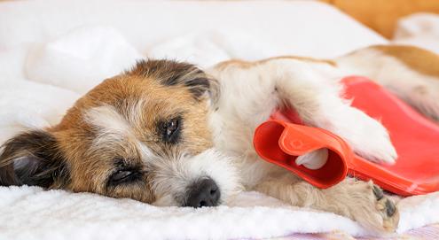 Hoe herken je spijsverteringsproblemen bij je hond of kat?