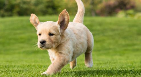Hoe houd je je puppy gezond