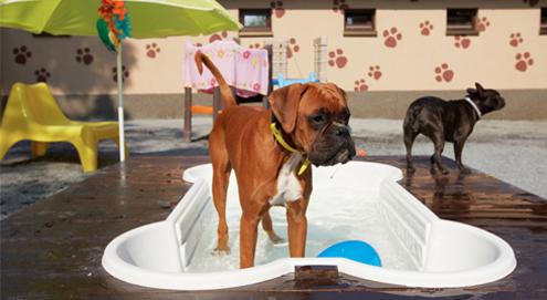 Honden en warm weer: 8 tips