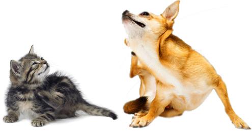 Hotspot bij hond en kat