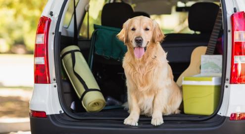 Hund oder Katze fährt mit in den Urlaub