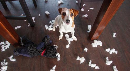 Hund (Welpen) alleine lassen