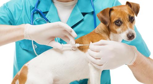 Identificatie en registratie van je huisdier met een chip