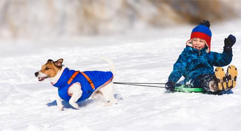 Je hond mee op wintersport
