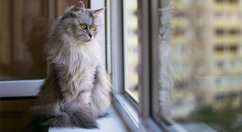 Kantelraam is een gevaar voor katten!