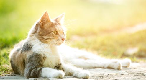 Kattengras