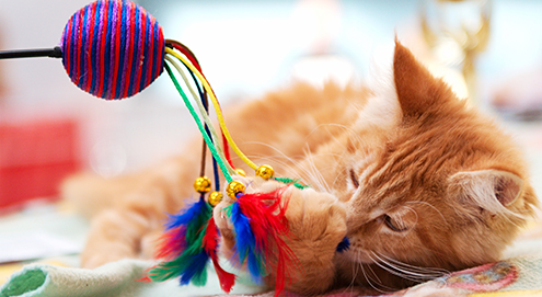 Katzenminze (Catnip)