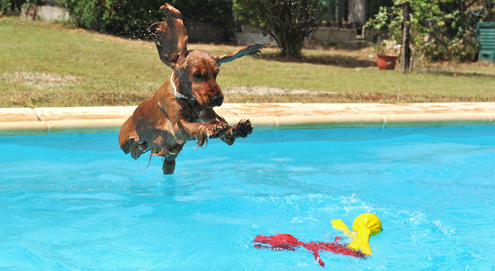 How to cool down your pet in hot weather