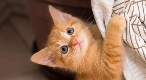 Kitten erziehen