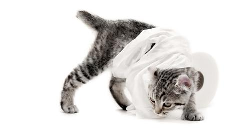 La diarrhée chez le chien et le chat