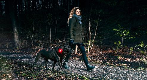 laat je hond opvallen in het donker
