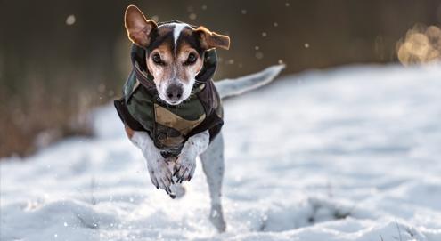 Un manteau d'hiver pour votre chien