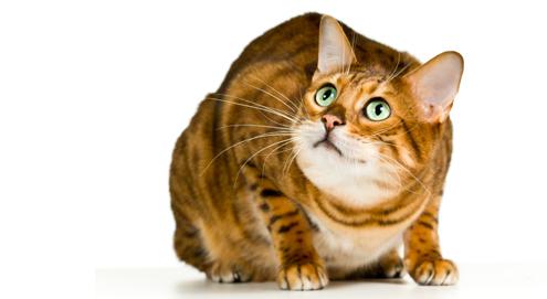 Le stress chez le chat : causes et conséquences