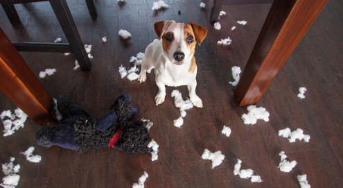 Leaving your puppy alone