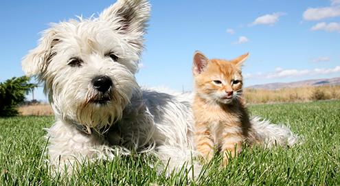 Longwormen bij hond en kat