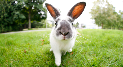 Myiasis bei Kaninchen