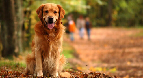 National Pet Month - How to help without donating money