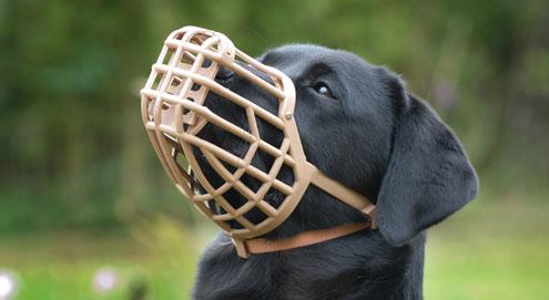Need a muzzle?